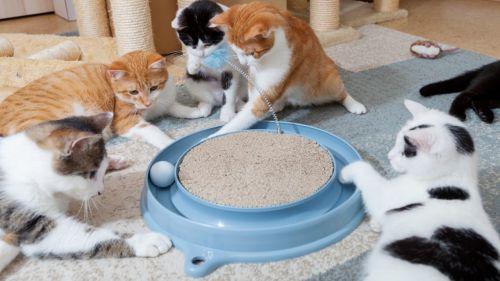 بررسی و خرید بهترین اسباب بازی گربه از دیجی کالا با تخفیف